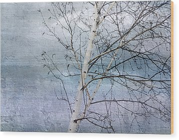 Winter White Birch  Wood Print