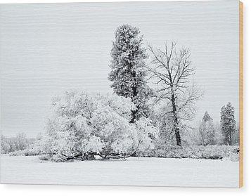 Winter White Wood Print by Mike  Dawson