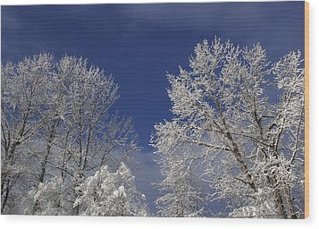 Winter White Wood Print by Sylvia Hart