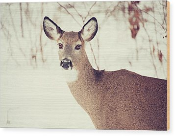 Winter White Tail Wood Print by Karol Livote