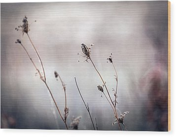 Wood Print featuring the photograph Winter Wild Flowers by Sennie Pierson