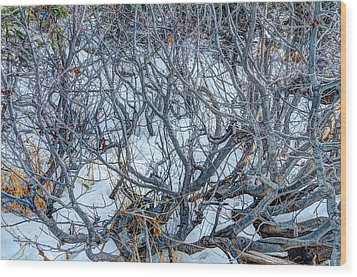 Winter Willow Wood Print by Jan Davies