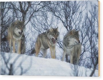 Winter Wolves Wood Print