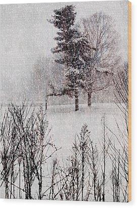 Winter Wonder 2 Wood Print by Maria Huntley