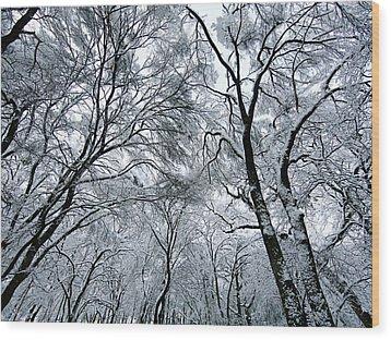 Winter Wonder Wood Print by Jeff Klingler