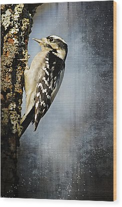 Winter Woodpecker Wood Print by Lena Wilhite