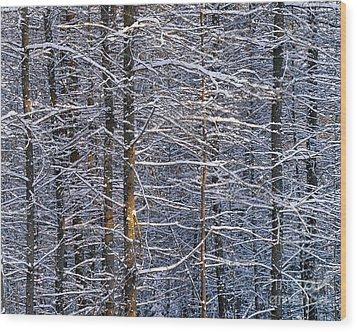 Winter Woods Wood Print by Alan L Graham