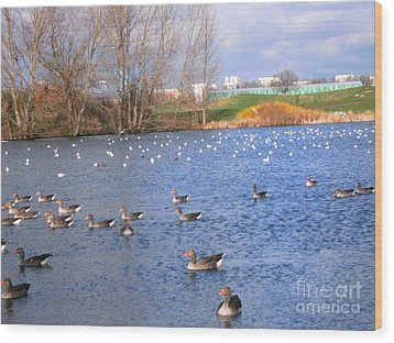 Wood Print featuring the photograph Wintering Birds - Mayesbrook Park by Mudiama Kammoh