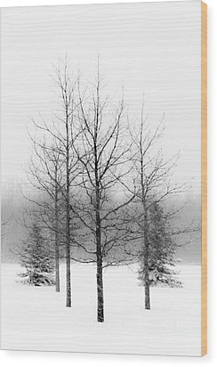 Winter's Bareness  Wood Print