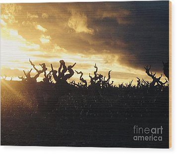 Winters Eve In The Vineyard Wood Print by France  Art