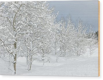 Winter's Glory - Grand Tetons Wood Print by Sandra Bronstein