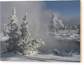 Winter's Glory - Yellowstone National Park Wood Print by Sandra Bronstein