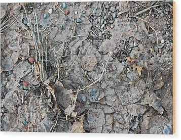 Wood Print featuring the photograph Winter's Mud by Allen Carroll