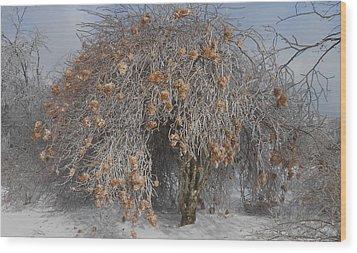 Wintertime Snowball Bush Tree Wood Print