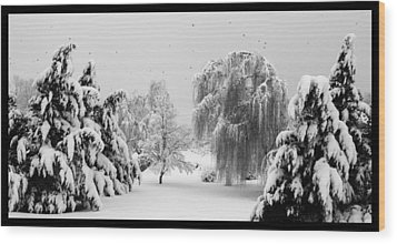 Wintery Scenes 1 Wood Print by David Lester