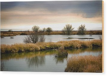 Wood Print featuring the photograph Wintery Wetlands by Jordan Blackstone