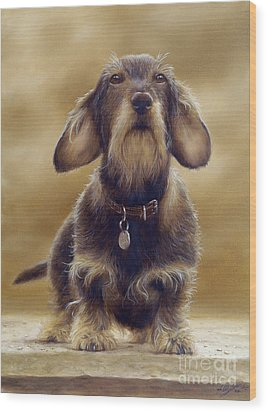 Wire Haired Dachshund Wood Print by John Silver