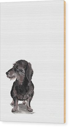 Wirehaired Dachshund - Rauhaardackel Wood Print by Barbara Marcus