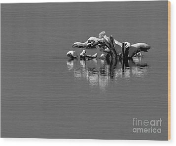 Wisconsin River Wood Print by Steven Ralser