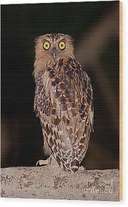 Wise Eyes.  Wood Print