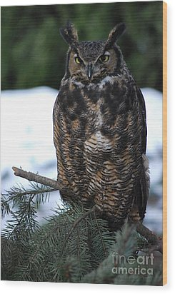 Wood Print featuring the photograph Wise Old Owl by Sharon Elliott