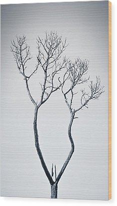 Wishbone Tree Wood Print by Carolyn Marshall