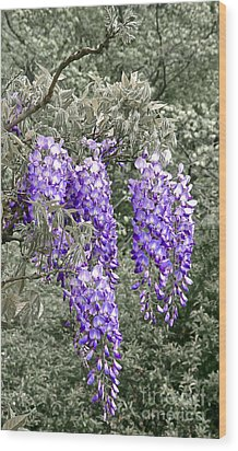 Wisteria Blossom Clusters Abstract Wood Print by Byron Varvarigos