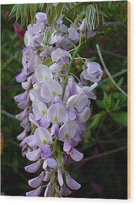 Wood Print featuring the photograph Wisteria Blossoms by MM Anderson