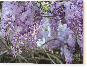 Wood Print featuring the photograph Wisteria Dream by Cathy Dee Janes