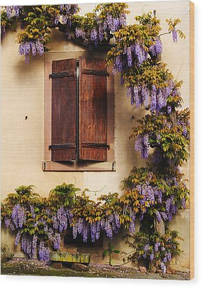 Wisteria Encircling Shutters In Riquewihr France Wood Print by Greg Matchick