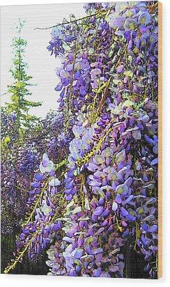 Wisteria - Fun Version 2 Wood Print by Jodie Marie Anne Richardson Traugott          aka jm-ART