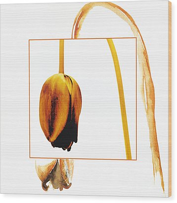 Withered Tulip Flower. Vintage-look Wood Print by Bernard Jaubert