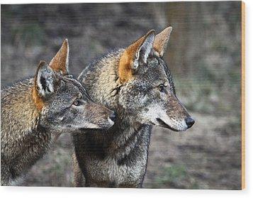 Wolf Alert Wood Print by Steve McKinzie