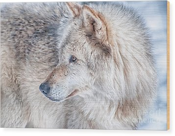 Wolf In Disguise Wood Print by Bianca Nadeau