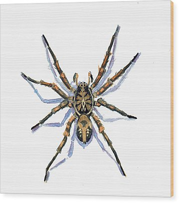 Wood Print featuring the painting Wolf Spider by Katherine Miller
