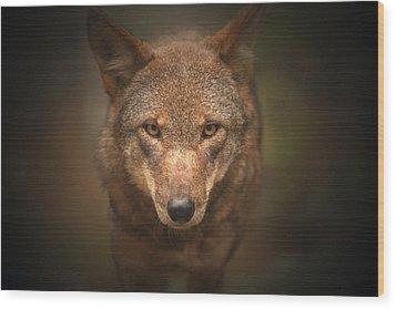 Wolf Stare Wood Print by Karol Livote