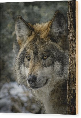 Wolf Upclose 2 Wood Print by Ernie Echols