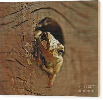 Wood Print featuring the photograph Wonder Frog by Nick  Boren