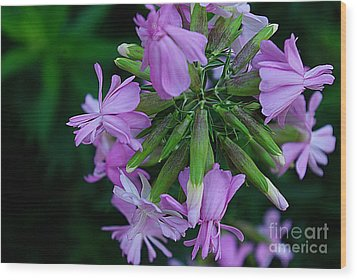 Wood Print featuring the photograph Wonderful Morning Flower by John S