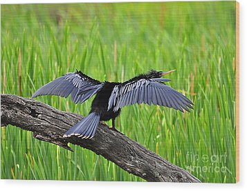 Wonderful Wings Wood Print by Al Powell Photography USA