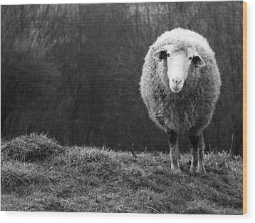 Wondering Sheep Wood Print by Ajven