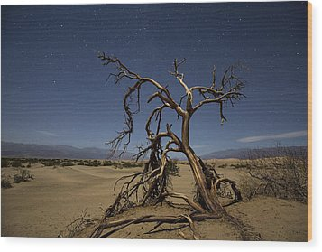 Wood Print featuring the photograph Wonderland  by Patrick Downey