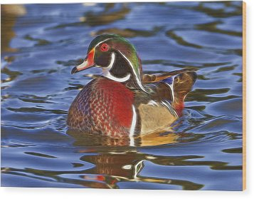 Wood Duck  Wood Print by Brian Cross