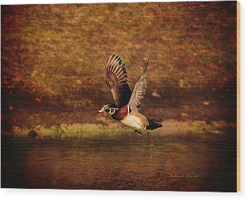 Wood Duck Taking Off Wood Print by Deborah Benoit