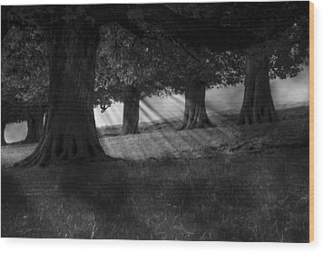 Wood Print featuring the photograph Wood I Dream by Stewart Scott