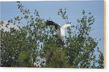 Wood Print featuring the photograph Wood Stork by Ron Davidson