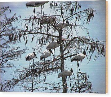 Wood Storks Wood Print by Will Boutin Photos