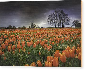 Woodburn Tulip Festival Wood Print by Jean-Jacques Thebault