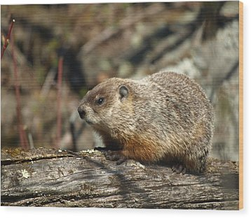 Wood Print featuring the photograph Woodchuck by James Peterson