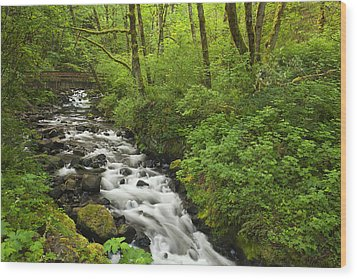 Wooded Stream In The Spring Wood Print